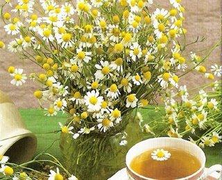 Chá De Camomila camomila1