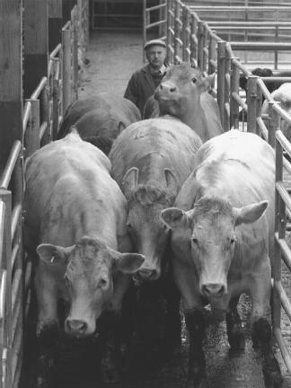 Doenças Raras Quase Sem Cura Doença Da Vaca Louca