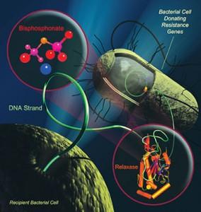 A Super Bacteria KPC – O Que é Superbactérias KPC Super Bacteria KPC 284x300