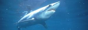 Os 10 Tubarões Mais Pe
