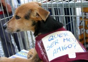 Adoção de Animais em SP – O Que Fazer Para Adotar um Cachorro  adoçao de animais sp 300x213