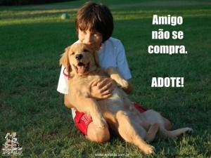 Adoção de Animais em SP – O Que Fazer Para Adotar um Cachorro  adote um animal 300x225