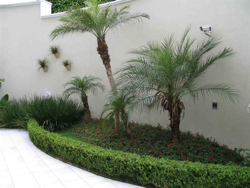 plantas jardim pequeno:Modelos de Plantas Mais Usadas na Decoração de Jardins-Fotos