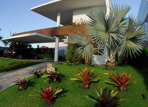 Modelos de Plantas Mais Usadas na Decoração de Jardins Fotos  plantas para decoraçao externa