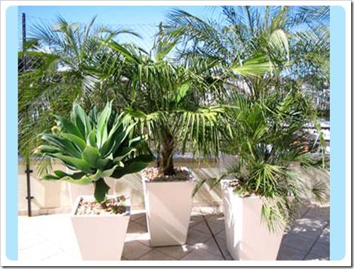 Modelos de Plantas Mais Usadas na Decoração de JardinsFotos