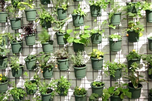 Horta Vertical Orgânica em Casa – Dicas, Como Fazer  horta vertical