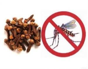 CravovsAedes