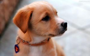 Hábitos Saudáveis Para Vida de Seu Cachorro – Dicas, Informações  (1)