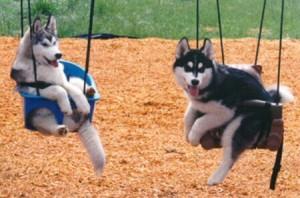 hoteis-para-cachorro