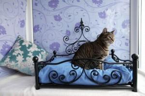 hotelzinho-para-gatos (9)