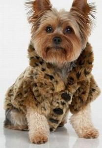 roupas-para-cachorros-animais-pets