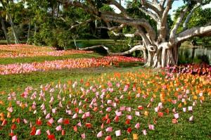 Fairchild-Tropical-Botanic-Garden-miami