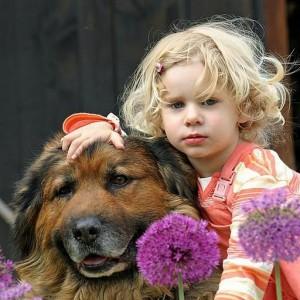 crianças e animais