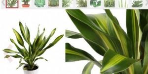 galeria-plantas-para-ambientes-fechados