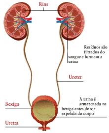 infeccao-urinaria