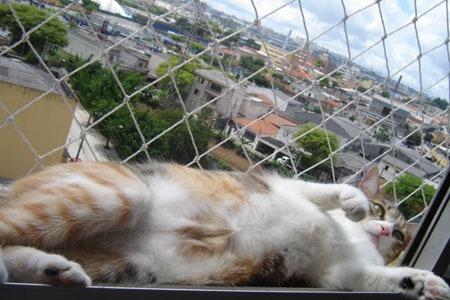 gatos e telas