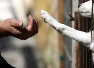 animais pedem socorro