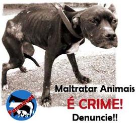 maus tratos aos animais