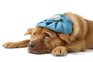 39151-veterinario-gratuito-clinica-veterinária-gratis2
