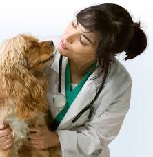 Clínicas Veterinárias Gratuitas em SP