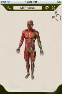 app-imuscle-corpo-musculatura